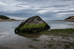shell (pamelaadam) Tags: newburgh forviesands aberdeenshire scotland june summer 2016 sea boat digital visions meetup fotolog thebiggestgroup