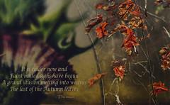Last of the Autumn Leaves (Paul B0udreau) Tags: macro nikkor50mm18 photoshop canada ontario paulboudreauphotography niagara d5100 nikon nikond5100 raw layer fotodioxextensiontubes 7mm14mm leaves autumn niagaraescarpment brucetrail thistle poem verse nature whointhefisthomas