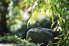 Zen (blichb) Tags: 2016 britishcolumbia chinesegarden drsunyatsengarden kanada sonya7rii vancouver vancouverchinesegarden zeissbatis1885 blichb chinesischergarten ca