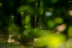 || YES !! I am back with Her || (NahidHasan95) Tags: wildlife wildbird winter bird animal outdoor dhaka bangladesh eye background dof pov