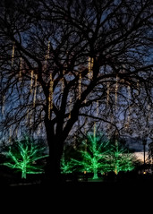 'Tis the season (Eduard Moldoveanu Photography) Tags: sunset tree background celebrate celebration christmas color december decorated decoration decorative festive green holiday kennettsquare light longwoodgardens merry outside pennsylvania season seasonal spirit winter xmas