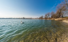 lake Zajarki (81) - swan (Vlado Fereni) Tags: autumn autumnmorning lakes swans lakezajarki zaprei croatia birds hrvatska nikond600 sigma1528fisheye fisheye animals animalplanet