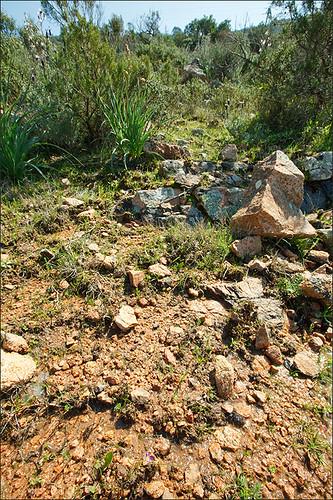 C3.4211 Communautés terrestres à Isoetes histrix et Romulea revelierei Corse