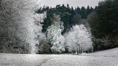 December (clé manuel) Tags: winter frost dezember december reif wald woods forest trees tree bäume baum land landscape germany deutschland