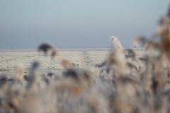 parallel lines (beta karel) Tags: betakarel 2016 landscape nature white winter dutch flevoland oostvaardersplassen almere