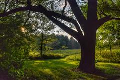 Afternoon sunlight through the trees. (tquist24) Tags: park trees shadow summer sun sunlight tree silhouette bristol geotagged nikon shadows unitedstates meadow indiana hdr bonneyvillemillcountypark nikond5300