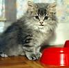 00386 (d_fust) Tags: cat kitten gato katze 猫 macska gatto fust kedi 貓 anak katt gatito kissa kätzchen gattino kucing 小貓 고양이 katje кот γάτα γατάκι แมว yavrusu 仔猫 का skorpi बिल्ली बच्चा
