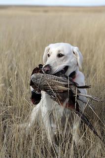 Nebraska Waterfowl Hunting 3