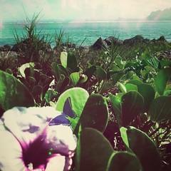 'Island Beauty' #Photography #PhotoManipulated #DigitalArt #paradise #Pacific #Guam #SarahMaurer #SarahArt #UsagigunnDesignInx (Usagigunn79) Tags: photography paradise pacific digitalart guam photomanipulated sarahart sarahmaurer usagigunndesigninx