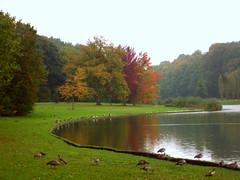 283/365 Autumn (cheesemoopsie) Tags: autumn trees fallleaves lake tree fall geese pond autumnleaves tervuren