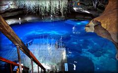 Into The Blue (gatorgalpics) Tags: florida naturalwonder sinkhole stalactites devilsden williston undergroundspring fossilbeds levycounty ancientrockformations pleistoceneage extinctanimalsremains