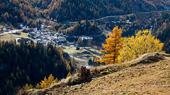 Bourg St-Pierre (La Tarrask) Tags: automne switzerland suisse swiss paysage arbre valais valdentremont bourgstpierre