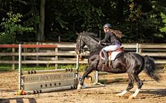 Doorn (Steenvoorde Leen - 3.4 ml views) Tags: doorn manegedentoom arreche paarden horses springen jumping hindernis fench 2015 halloween happyhalloween manege horse pferd reiten paard pferde haloween utrechtseheuvelrug cheval