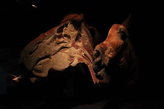 Science World - October 15, 2015 (rieserrano) Tags: horse head bodyworlds plastination