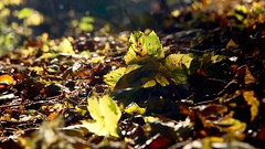 Forest Elswout (herman vogel) Tags: autumn fall forest herfst leafs elswout