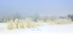 solstice (patrice ouellet) Tags: solstice wintersolstice patricephotographiste