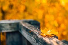 The Edge of Autumn (icemanphotos) Tags: autumn orange sunlight leaves yellow leaf mood calm magical sigmaart