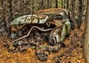 McLean's XIII (martinaschneider) Tags: auto old trees ontario tree fall abandoned leaves car rust hdr rockwood wreckers mcleans