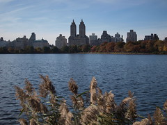 looking across the water (amysh) Tags: nyc newyorkcity newyork nature reeds weeds centralpark jacquelinekennedyonassisreservoir eastdrive olympuse420