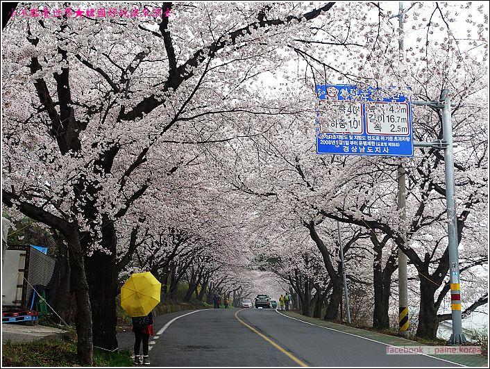 河東花開十里路 (65).JPG