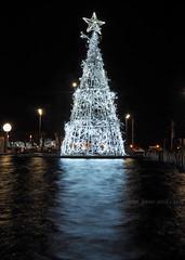 Light Tree (.annajane) Tags: christmas uk longexposure decorations england reflection water fountain pool night liverpool lights merseyside liverpoolone thomassteersway
