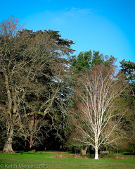 Catching the sun (Keith (M)) Tags: leica trees landscape arboretum westonbirt sunlit xvario