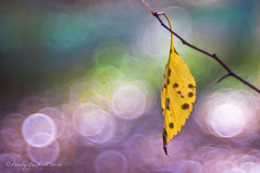 October (brady tuckett) Tags: meyeroptikgrlitztrioplan100mmf28 meyeroptikgrlitztrioplan meyeroptikgrlitz meyer grlitz 100mm bradytuckett brady tuckett trioplan bokeh nature macro leaves light plant leaf flora color colors flower flowers m42 macros photosynthesis m42lenses m42mount blue green pink yellow