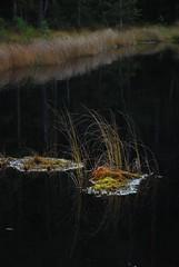 Makkarajrvi (gnulp) Tags: makkarajrvi hervanta tampere jrvi sammal mets lokakuu