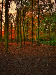 ..is beautiful (Stoergi) Tags: landscape landschaft nature natur worldwidelandscapes pfad path baum bäume tree trees wald forest herbst autumn november deutschland germany alemania aleman hdr natureselegantshots panoramafotográfico photosandcalendar outdoor heiter pflanze laub leaves