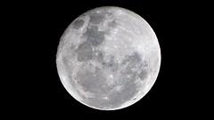 Vejo a super lua no cu! (Julio Pinon) Tags: superlua brazil brasil natureza luacheia bluemoon fullmoon lua moon espao space