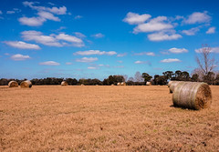 Hay Round-Up (Sonia Argenio Photography) Tags: bysoniaa flickr flickrsoniasgallery flickrsoniaargenio flickrsoniagallery green soniaargenio trees white bales blue bluesky clouds field hay hayroundup hayfield outdoor pasture photographer puffy puffyclouds sky
