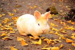 *-* (il ' aria) Tags: coniglietto coniglio bunny rabbit sweety sweet animale animals pet pets dolce carino coccoloso fall autumn autunno