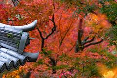 Nishiyama-Koryu Temple 2 (Hiro_A) Tags: nishiyamakoryu temple autumn leaves fall red roof saijo ehime shikoku japan nikon d7200 tamron 70300mm 70300