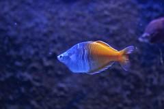 IMG_5699 (godpasta) Tags: newportaquarium kentucky newport aquarium