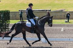 161023_Aust_D_Champs_Sun_Med_4.3_6558.jpg (FranzVenhaus) Tags: athletes dressage australia siec equestrian riders horses performance event competition nsw sydney aus