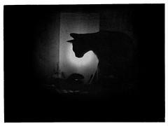 It's Oh So Quiet (P. Correia) Tags: aliendejesus 2016 lisbon panasonicdmcfz18 lisboa pcorreia björk littledoglaughednoiret thecatwhoturnedonandoff