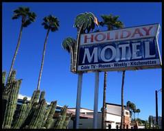 Holiday Motel (~ Lone Wadi Archives ~) Tags: mesaarizona holidaymotel sign business motel lodging retro americansouthwest palmtrees cactus cacti maricopacounty