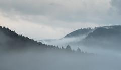 Black Forest (Guido de Kleijn) Tags: blackforest schwarzwald guidodekleijn nikond500 sigma105mmf28exdgoshsmmacro schwarzenberg schwarzenbergbaiersbronn