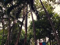 (adlaw) Tags: coconut mango jackfruit