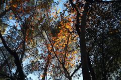Troodos Geopark (28) (Polis Poliviou) Tags: polispoliviou polis poliviou   cyprus cyprustheallyearroundisland cyprusinyourheart yearroundisland zypern republicofcyprus  cipro  chypre   chipir chipre  kipras ciprus cypr  cypern kypr  sayprus kypros polispoliviou2016 troodosgeopark troodos mediterranean nicosia valley life nature forest historical park trekking hiking winter walking pine pines prodromos limassol paphos fall autumn geopark kakopetria
