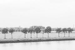 Life's what you make it (Robin Kelderman) Tags: utrecht kanaal canal papendorp polder tree trees water nederland niederlande thenetherlands holland offices office kantoor kantoren