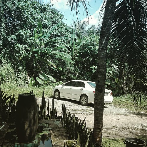 Office work  #office #jungle #phuket #car