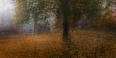 October's Song (Lorraine Fernando) Tags: 1x 500px architecture blur chile designfeatures location lorraine multipleexposure portfolio saatchi southamerica impressionist motion