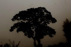 (lejardindevenus) Tags: méxico méxicomágico cuetzalán landscape foggylandscape