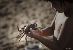 (susan prez) Tags: explorar mar animales marinos cangrejo arena juegos