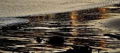 Kelp and water pattern , Port Elliot (robynbrody) Tags: portelliot fleurieu peninsula southaustralia beach water sea seaweed kelp patterns australia sand ocean waves surf