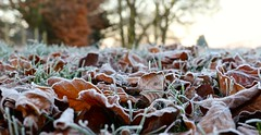 Day 342 Crunchy (c-mitchell39) Tags: leaves frosty frost frozen frostyleaves frostygrass dailydogwalk dogwalk earlymorning winter wintermorning wickhamford