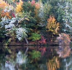 Autumn Reflections (ksblack99) Tags: autumn leaves reflection kensington milford michigan allfreepicturesmay2018challenge
