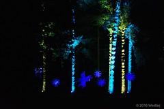DSC04185 (Twareg) Tags: 2016 aboretum bpw enchanted forest westonbirt bathphotowalk gloucestershire england