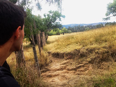 Esperando tu llegada (Curro Chompis) Tags: stirring view sight field waiting green fence cerca esperando mirando pensando thinking